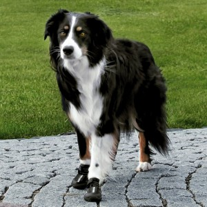 new-trixie-walker-active-protective-dog-boots-shoes-all-sizes-1-2-4-pk-[3]-7-p
